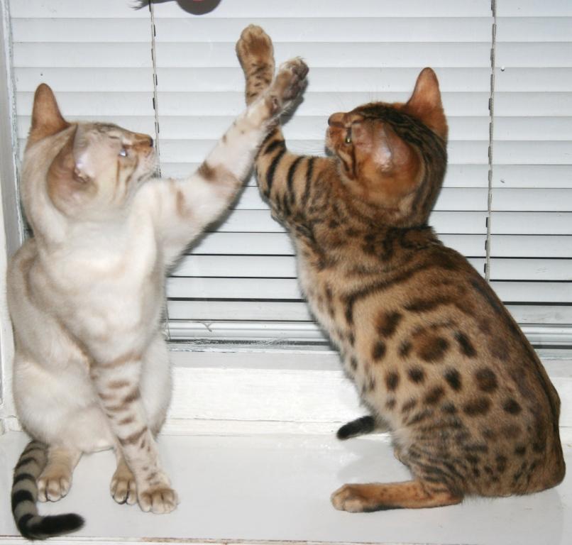 У котов моча почему сильно пахнет
