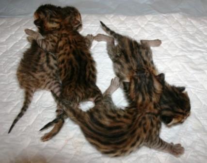 Купить корма для кошек в интернет-магазине Reksshop